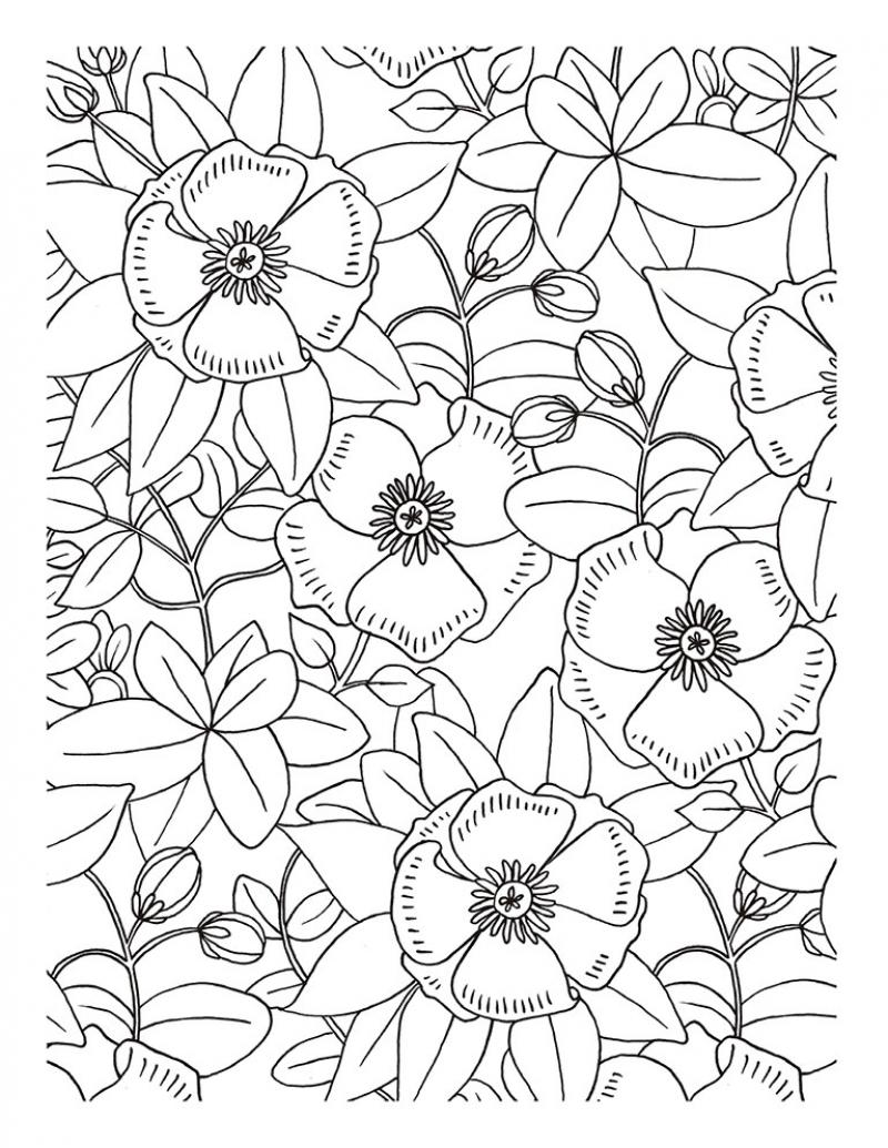 Encantador Intrincadas Páginas Para Colorear Naturaleza Viñeta ...
